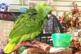 Cheerful Parrot Sings 'Everything Is Awesome'