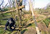 Chimpanzee Takes Out Drone With Tree Branch